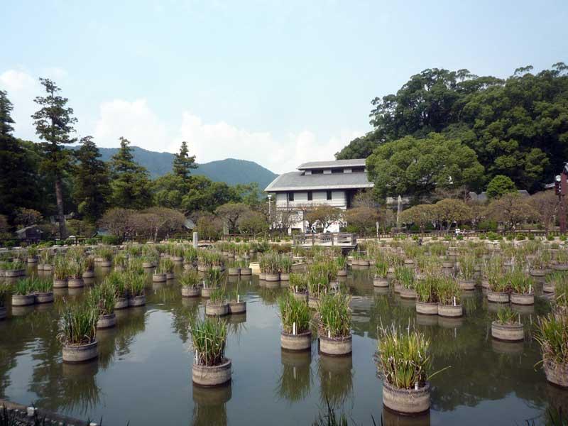 うぐいす茶屋からの菖蒲池の眺め