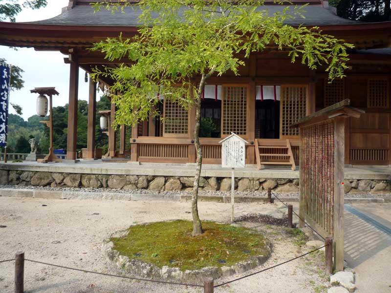 竈門神社 再会の木