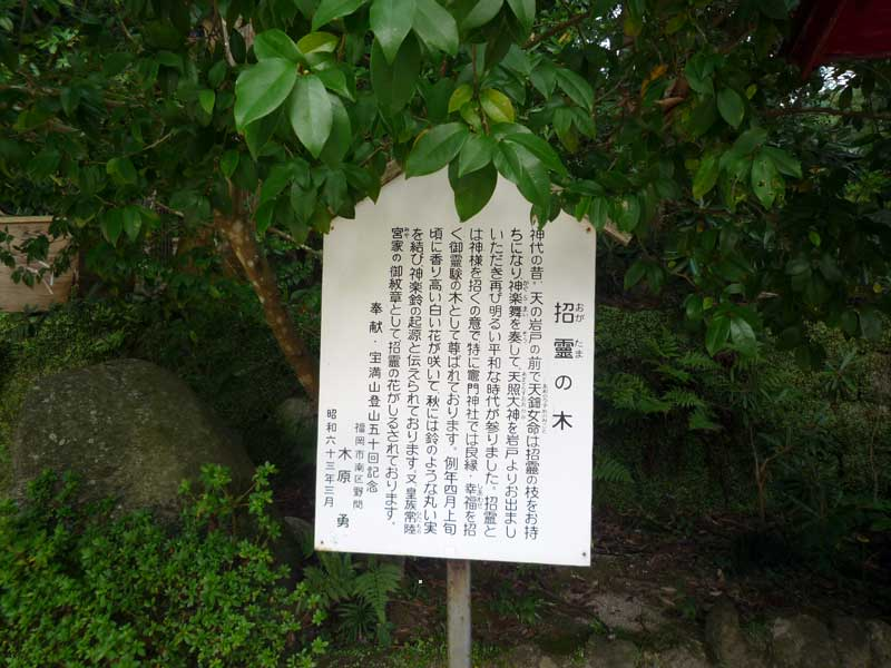 竈門神社 招霊の木