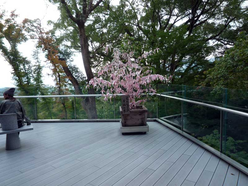竈門神社 えんむすび幸福の木