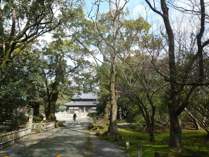 太宰府の観世音寺 参道