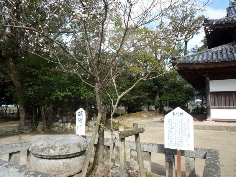 太宰府の観世音寺 菩提樹